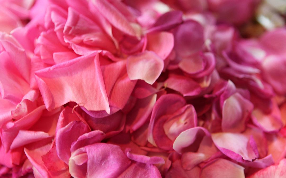Old Garden Rose Preserves
