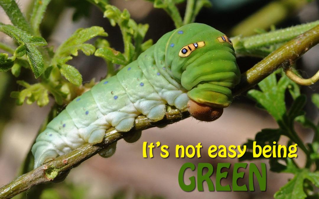 Cutest Caterpillar Photo Contest Winners!