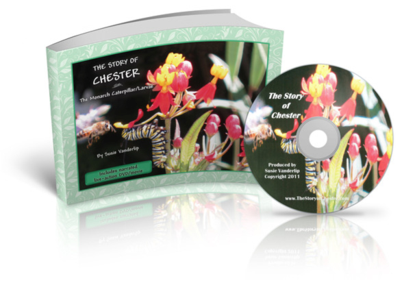 The Story Of Chester ~ The Monarch Caterpillar